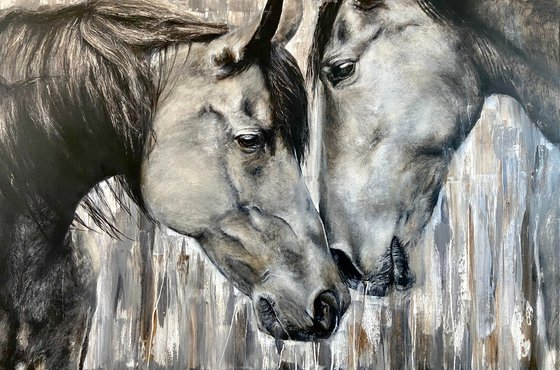 Eye to eye, brown horses
