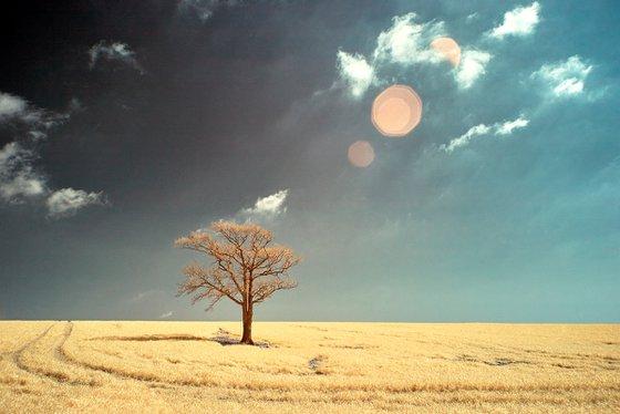 Kithurst Tree #12