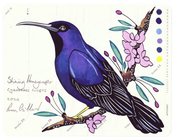 Birds of South America: Shining Honeycreeper