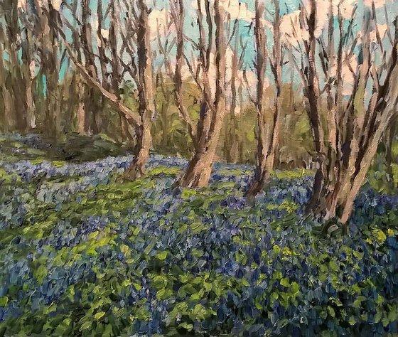 bluebell wood IV