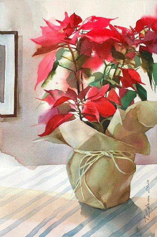 Poinsettias Flower