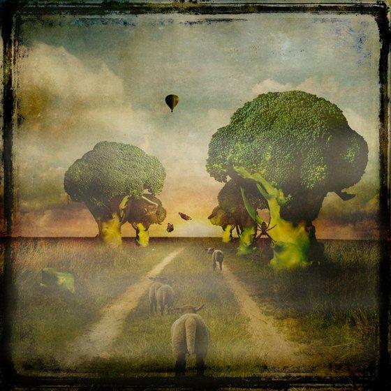 Broccoli Lane