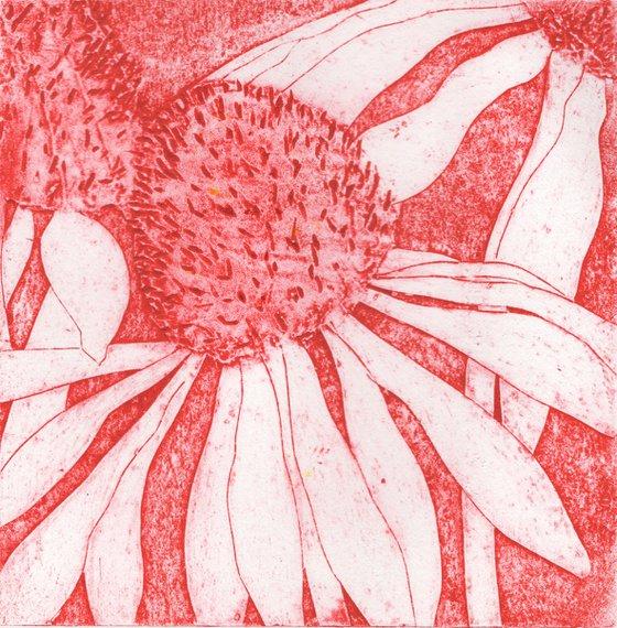 Echinacea 9-10