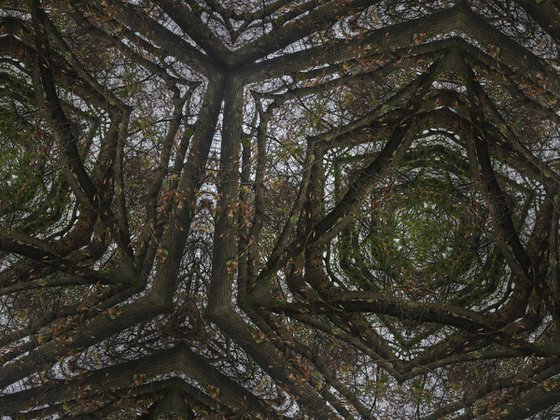 Photography | Forest mosaic