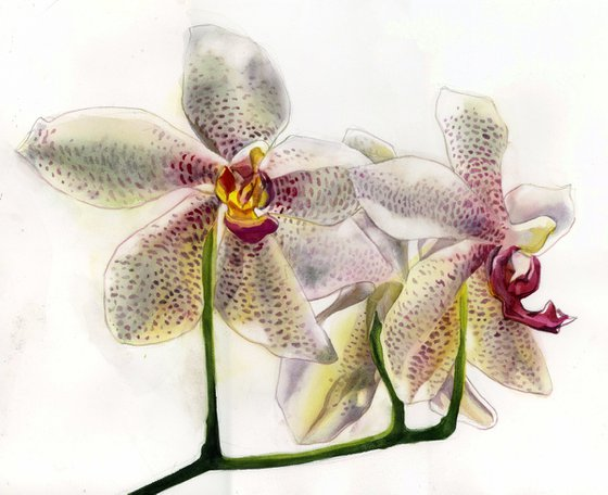 orchid in white