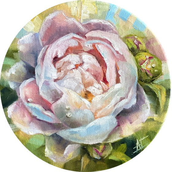 White / pink peony small round gift original oil painting. Tender garden flower. Made with love.