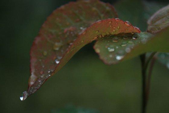 Photography | Tears of heaven