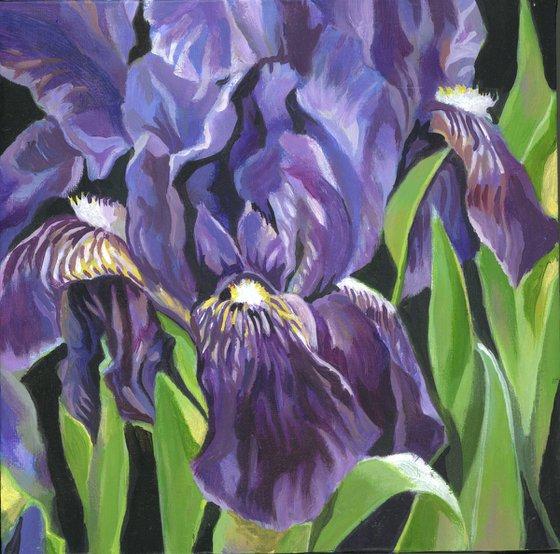 blue irises acrylic floral