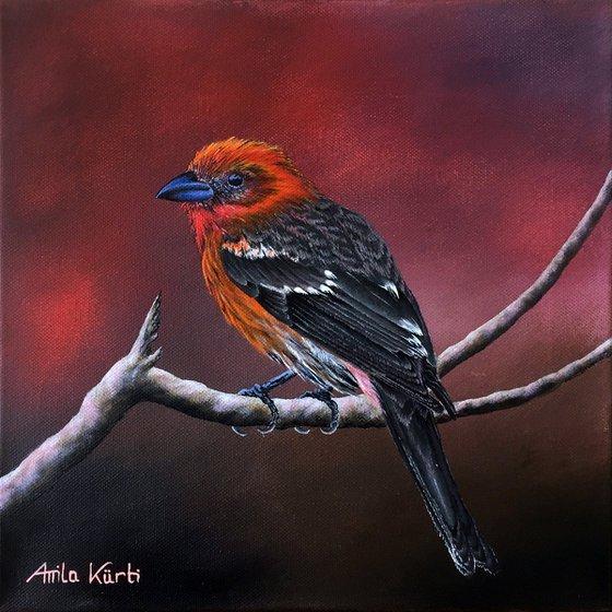 Red Tanager Bird