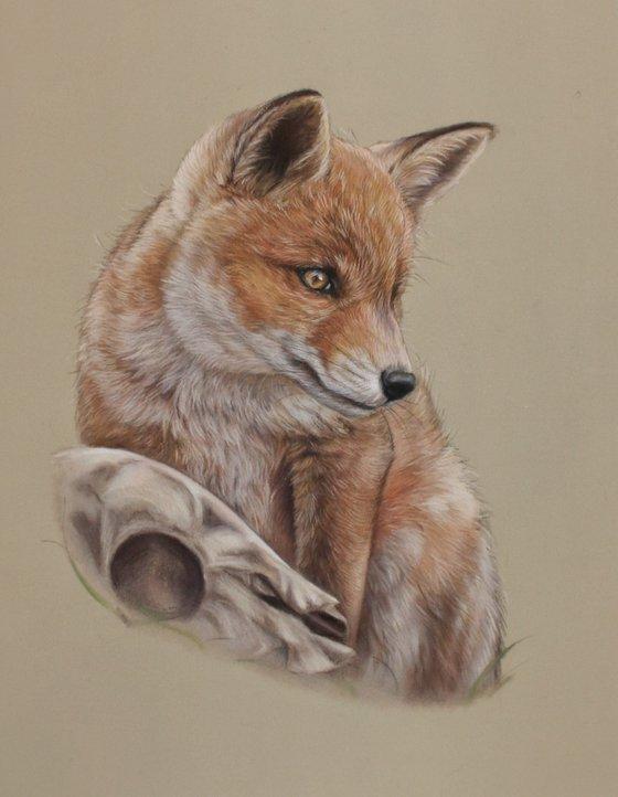 Fox and skull.