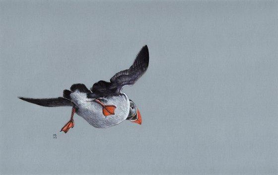 "Original pastel drawing bird ""Atlantic puffin"""