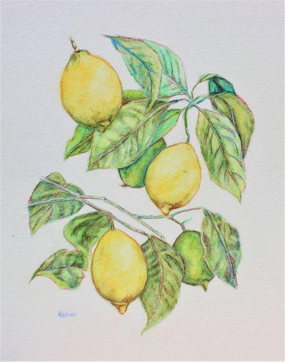Lemon Tree II