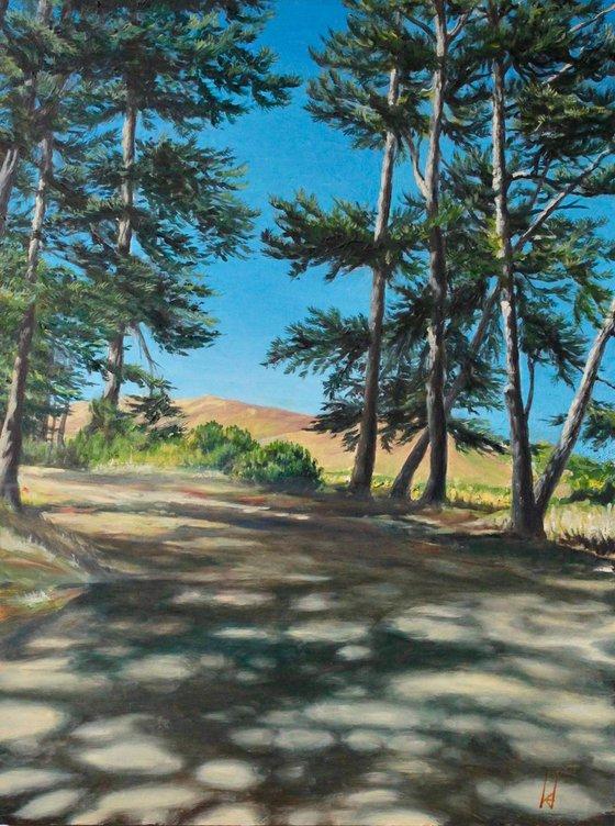 Marin Pines