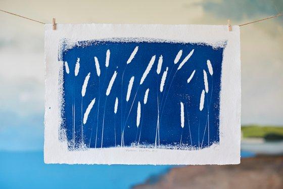 Meadow Foxtail #2 (Cyanotype)