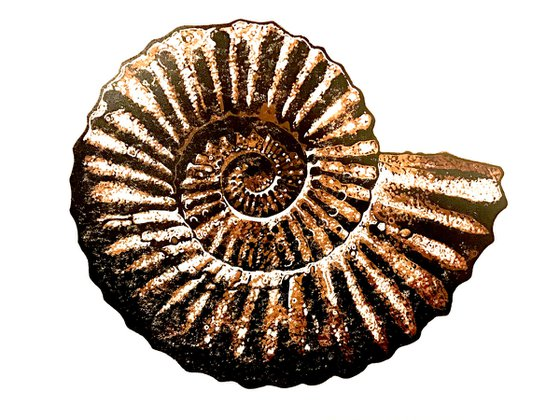 Ammonite (brown) linocut print
