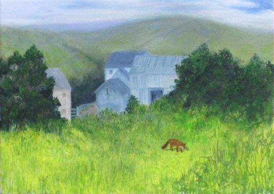 Fox at West Ford Farm