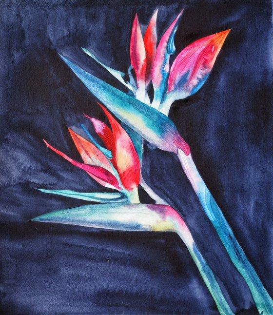 Strelitzia on blue-black velvet, vol.3 - original watercolor artwork, flower on black