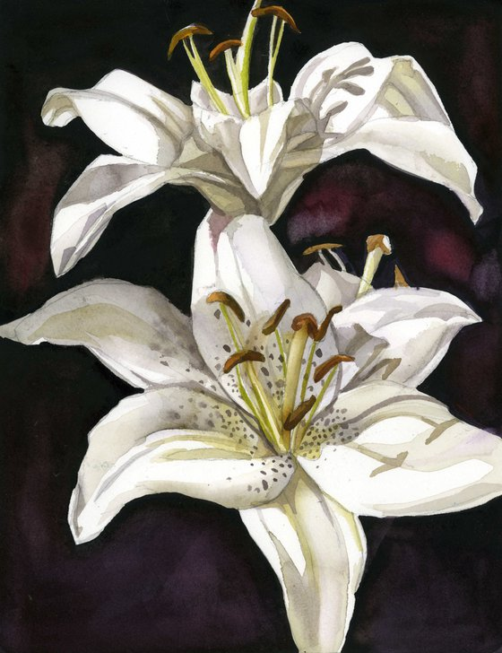 white lilies watercolor floral