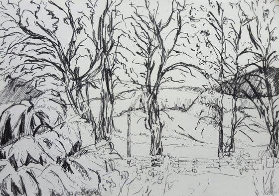 Lake District Garden