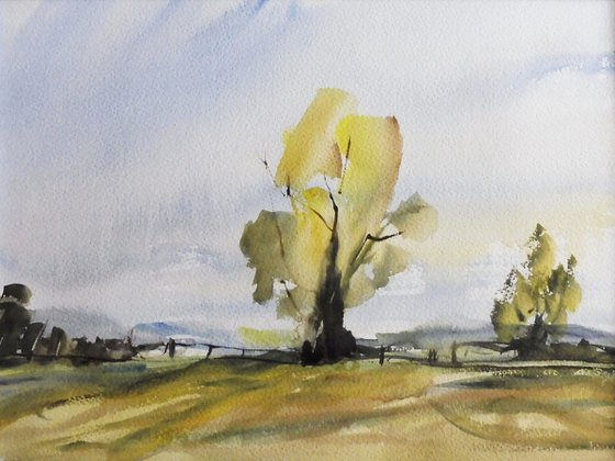 SUMMER TREE and FIELDS Worcestershire.
