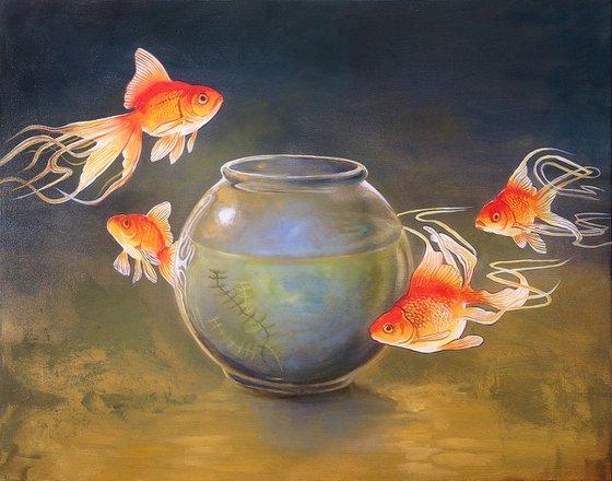 Goldfish XXXI