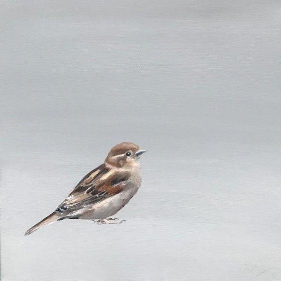 A Little Bird Told Me I