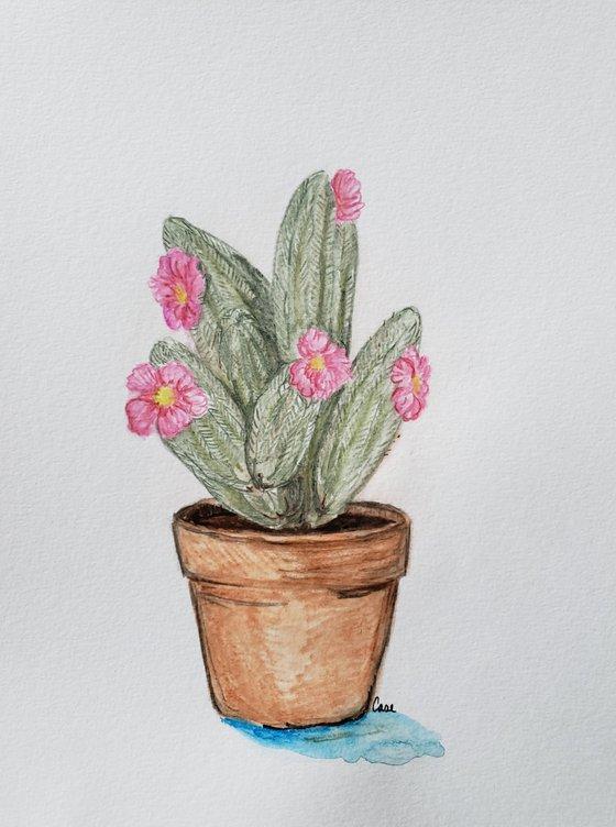 """Cactus - Flower - """"Succulent"""""""