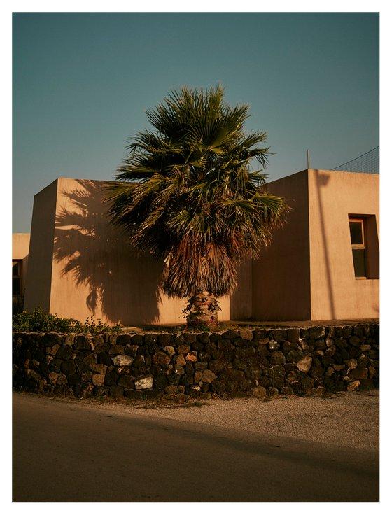 Palm at sunset