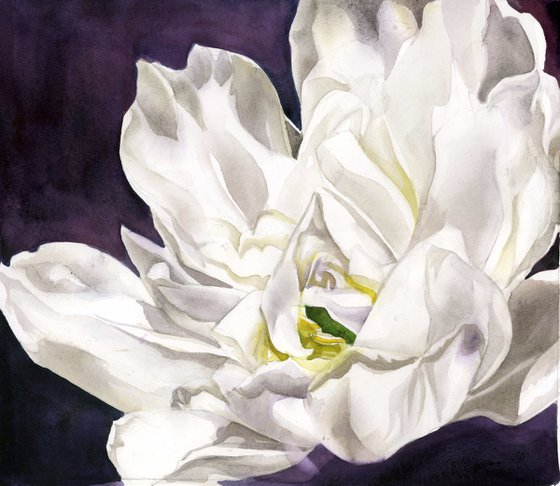 white French tulip watercolor