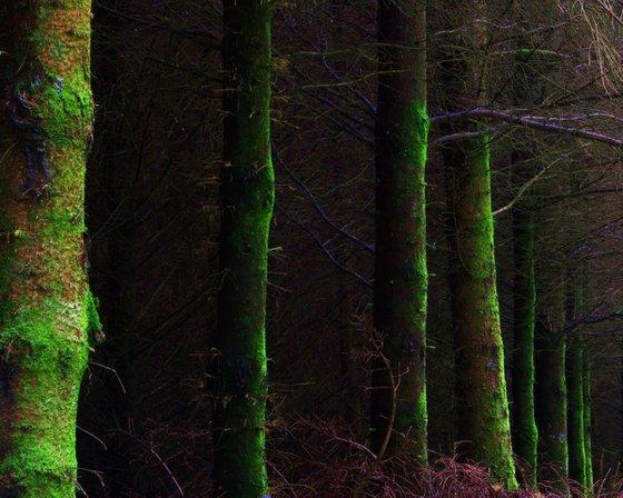 Dark Forest, woodland landscape